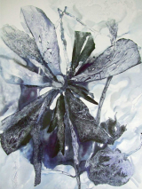 Winterblume (120 x 150 cm)