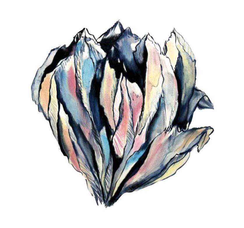 Gebirgige Blüten, felsige Blumen